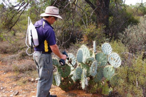 injecting-cactus-website
